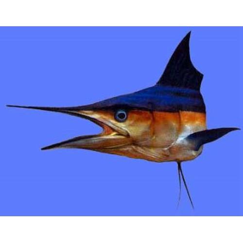 Spearfish Shortbill 60