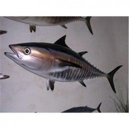 Bluefin Tuna 100